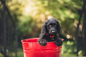 Fill your bucket - do things that energise you, Epiphany Life Coaching